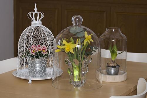 fr hling im katzenhaushalt vorsicht vor giftpflanzen golli thek. Black Bedroom Furniture Sets. Home Design Ideas