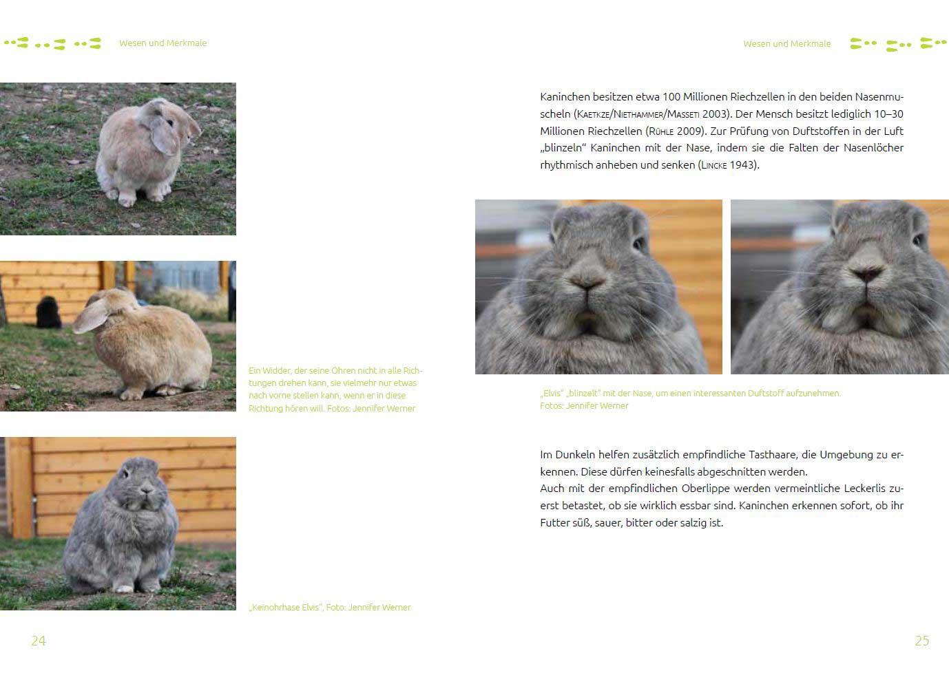 Leseprobe 1 Das Tierschutz-Kaninchenbuch