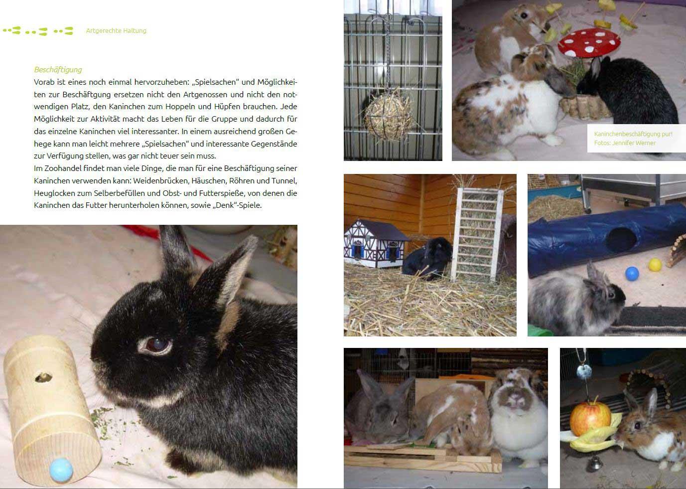 Leseprobe 3 Das Tierschutz-Kaninchenbuch