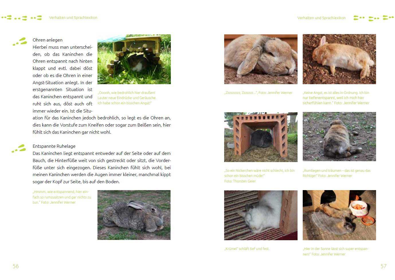 Leseprobe 4 Das Tierschutz-Kaninchenbuch